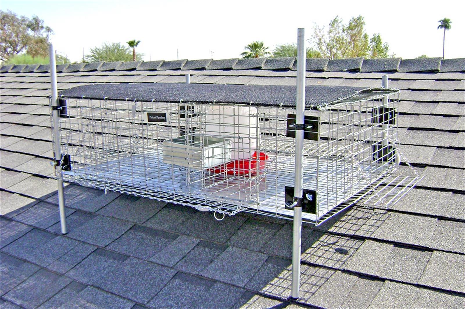 Rooftop Pigeon Trap 36x24x10 | Nixalite