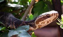 Cahaba Snake Traps Nixalite Of America