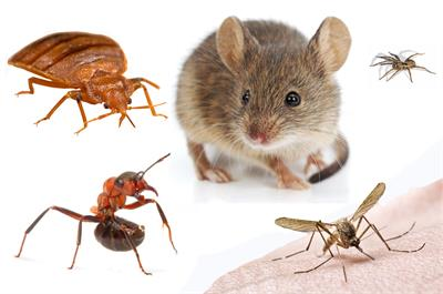 pest control products pest composite photo - Pest Control Products