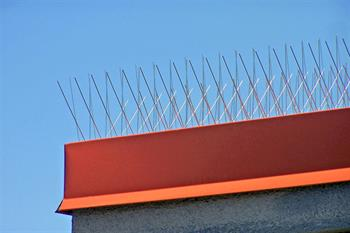 Bird Spikes on Parapet