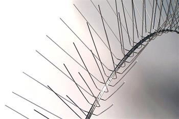 Flexible Stainless Steel Bird Spike