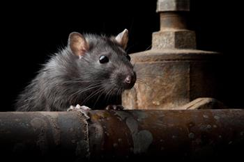 RoadBlock Bio-Repellents for Rodents