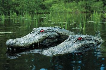 Gators in lake
