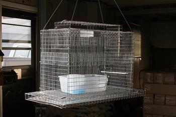 SKY TRAP - Professional Hanging Sparrow Trap
