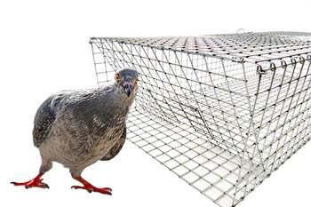 HD Folding Pigeon Trap Front View