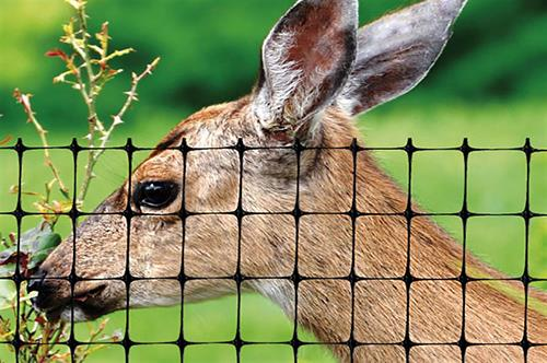 deer behind fence eating foliage