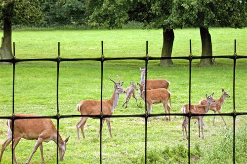 Deer fencing with herd