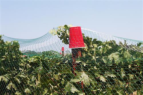 vineyard netting support