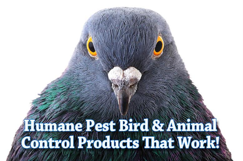 Effective Pest Bird Wildlife Control Products Nixalite