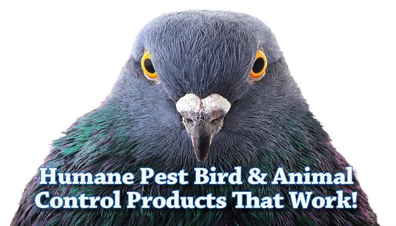 Effective Pest Bird Wildlife Control Products Nixalite
