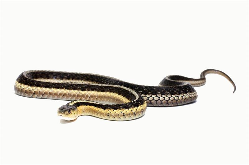 Options snake guard trap case 12 snake traps