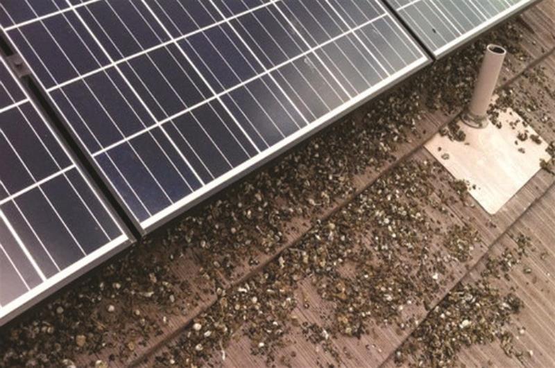 Solar Panel Bird Amp Pest Exclusion Nixalite